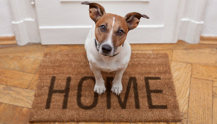 Doormat for Dogs
