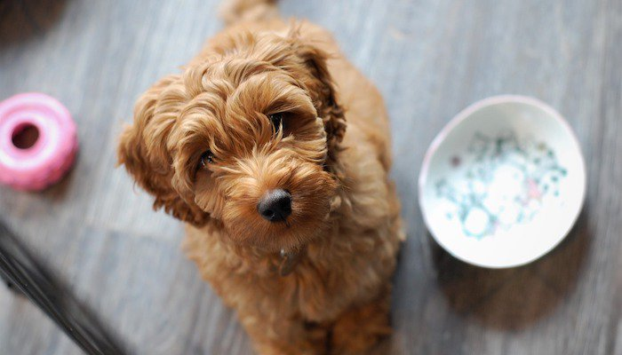 Best Mixed Breed Dogs