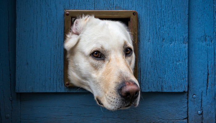 10 Best Dog Doors in 2021