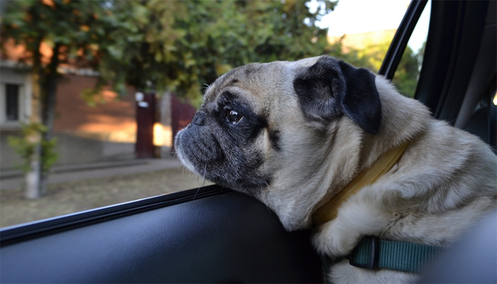10 Best Car Seat Belts for Dogs in 2021