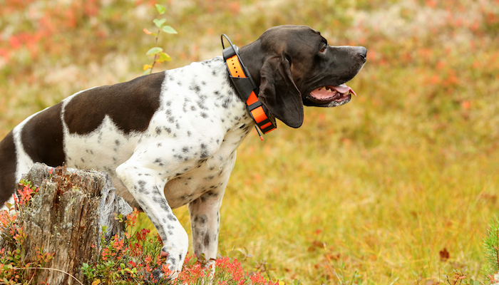 9 Best Dog GPS Trackers in 2021