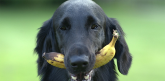 Dog biting a Banana
