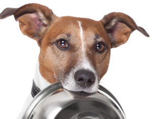 Low Fat Dog Foods