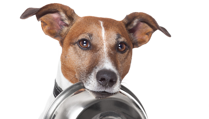 Best Low-Fat Dog Food in 2021
