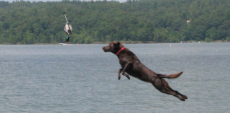 Black Dog dock diving