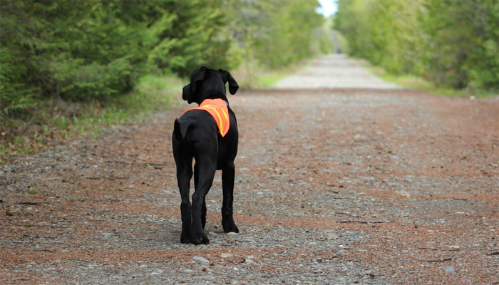 10 Best Dog Anxiety Vests in 2021