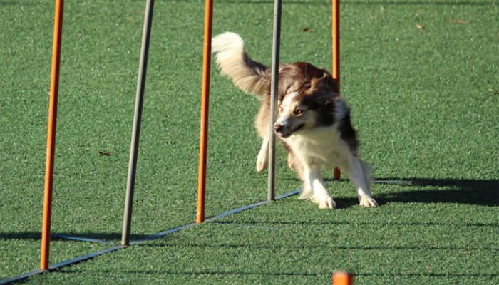 Agility: A Beginner's Guide