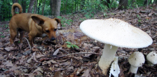 Dog and Mushrooms