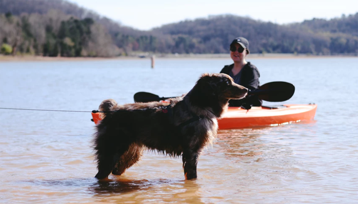 Dog on the shore near woman on kayak
