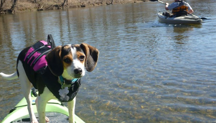 10 Tips on Kayaking with Dogs