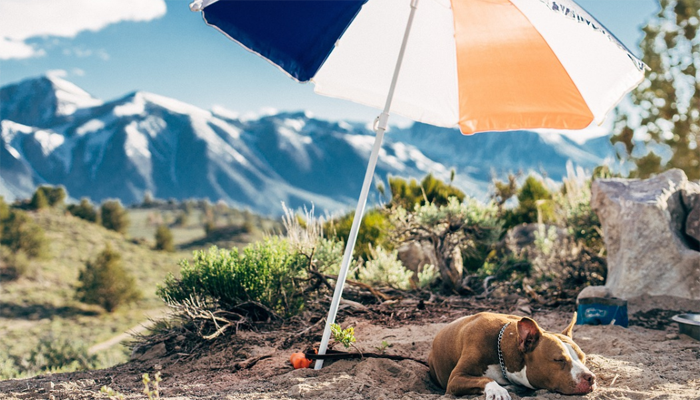 6 Best Umbrellas For Dogs in 2021