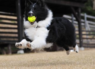 Dog with a ball on his mouth