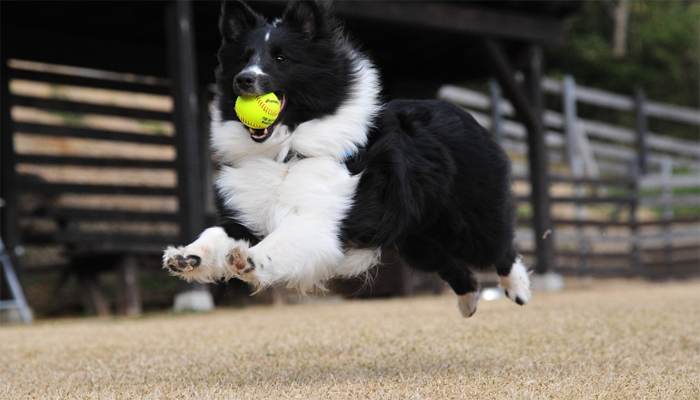 Flyball: A Beginner's Guide