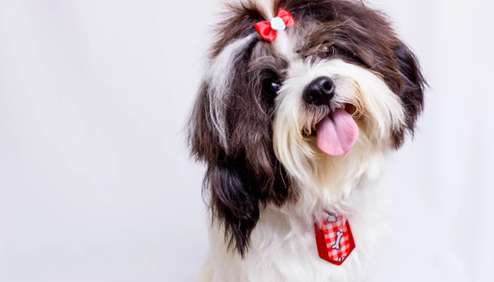 8 Best Dog Hair Bows in 2021