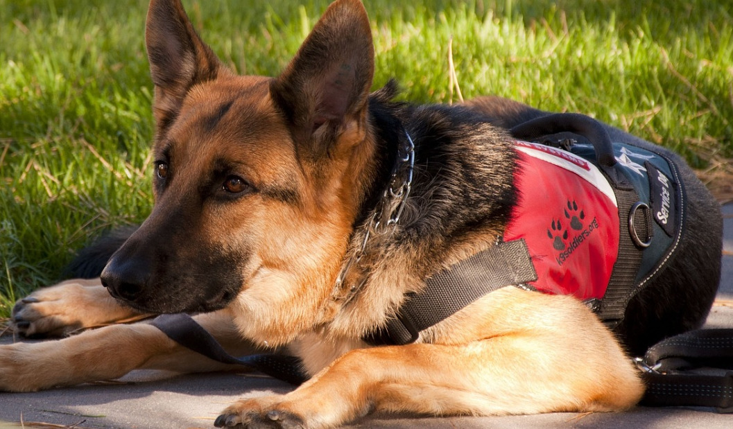 Best Service Dog Vest in 2021