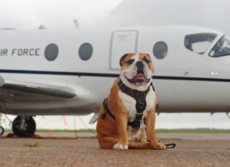 Air Travel with Dogs - Complete Guide