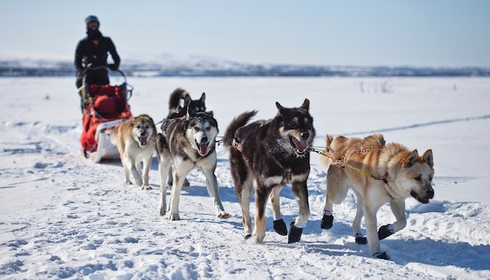 Ultimate Guide to Dog Sledding