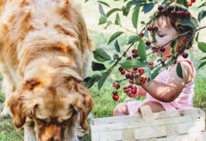 Baby and dog on a cherry tree