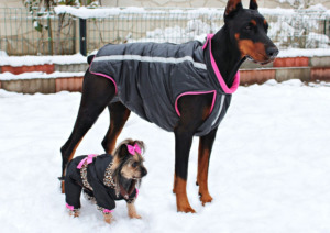 Big and small dogs with accessories