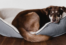 Dog on a dog bed