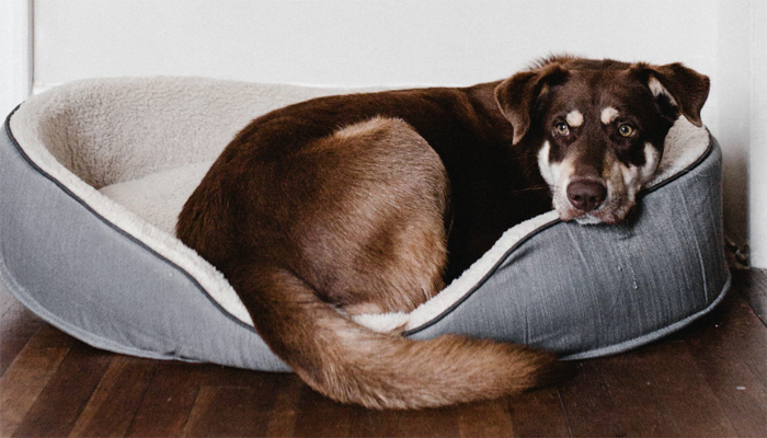 5 Best Indestructible Dog Beds in 2021