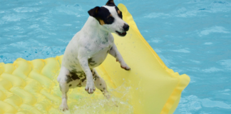 Dog on the swimming pool