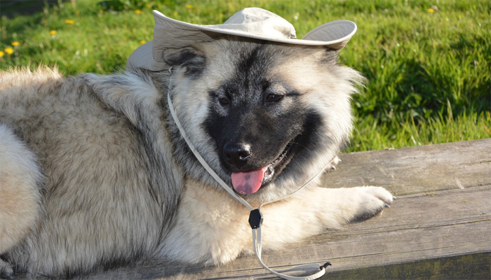 7 Best Dog Hats in 2021
