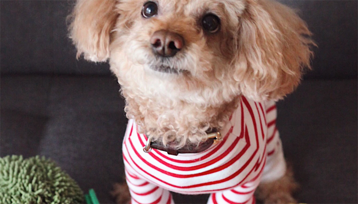 7 Best Dog Pajamas in 2021