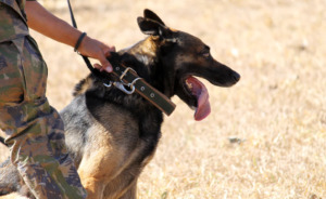 Military man holding a dog with leash