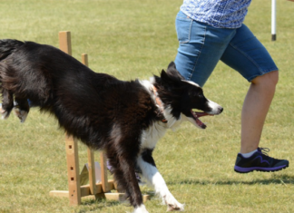 Person training with Dog