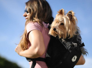 Woman with dog on a backpack