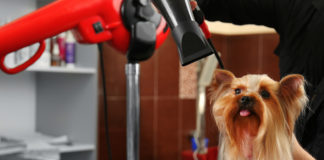 Dog Blow-Dryers