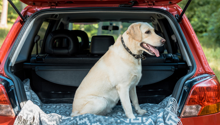 9 Best Dog Car Barriers in 2021