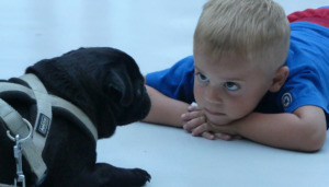 Boy and Dog facing each other