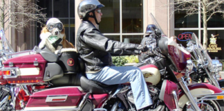 Man and dog on a motorcycle