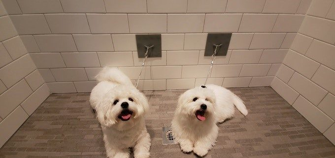 Two white dogs using Pawbble