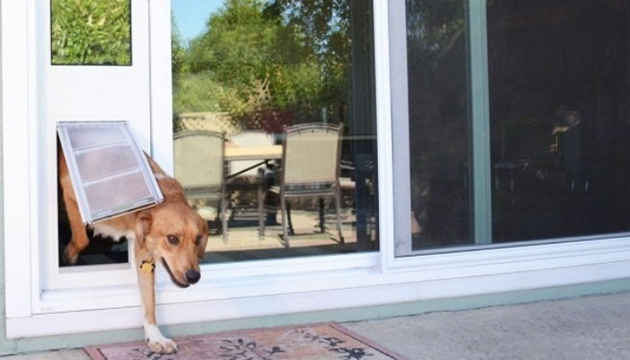 3 Best Electronic Dog Doors in 2021