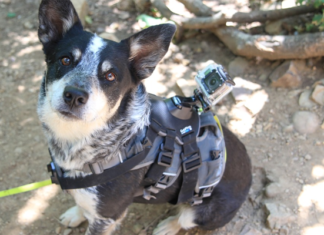 Dog with camera at the back