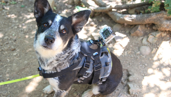 5 Best Dog Monitors in 2021