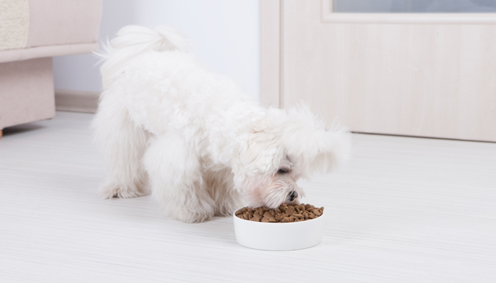 8 Best Dog Foods to Gain Weight in 2021
