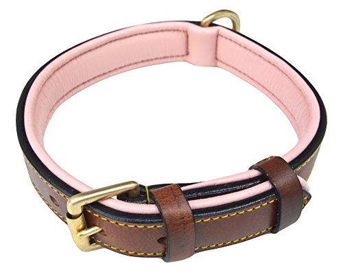 Soft Touch Collars Leather Two-Tone Padded Dog Collar