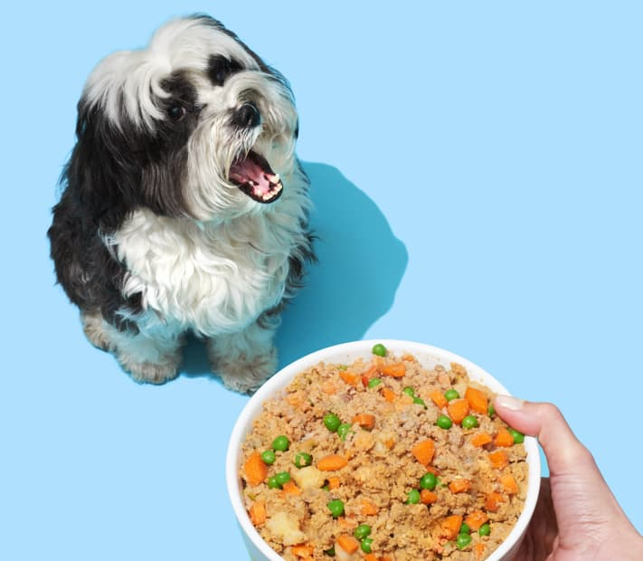 dog bowl with pet plate dog food