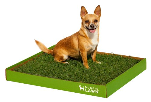 DoggieLawn Disposable Real Grass Dog Toilet