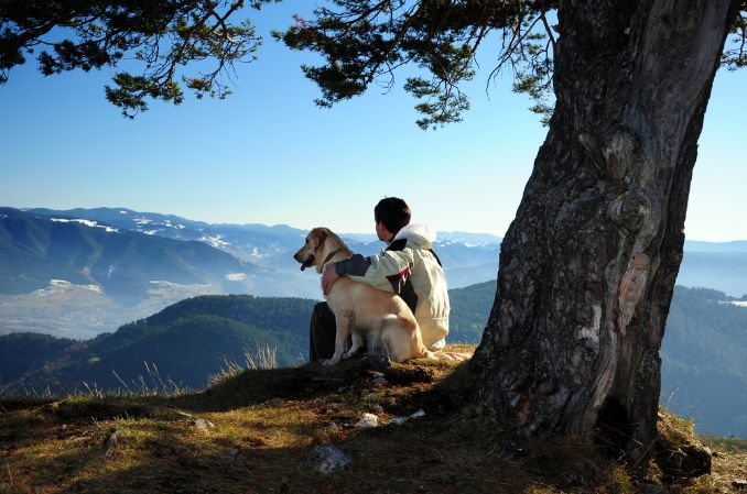 Best Hiking Dogs – The Best Large and Small Breeds