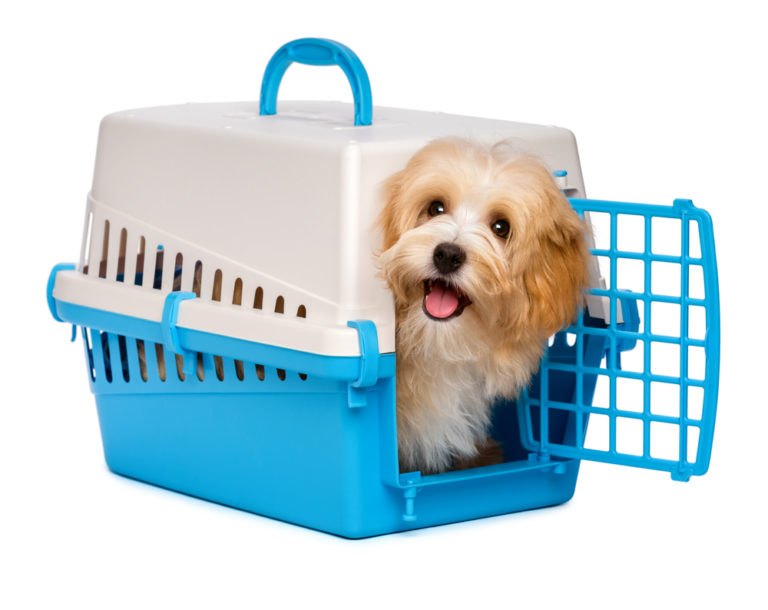 Best Travel Dog Crate in 2021