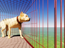 dog getting out the cage