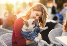 Beautiful woman holding adorable fawn french bulldog in her lap