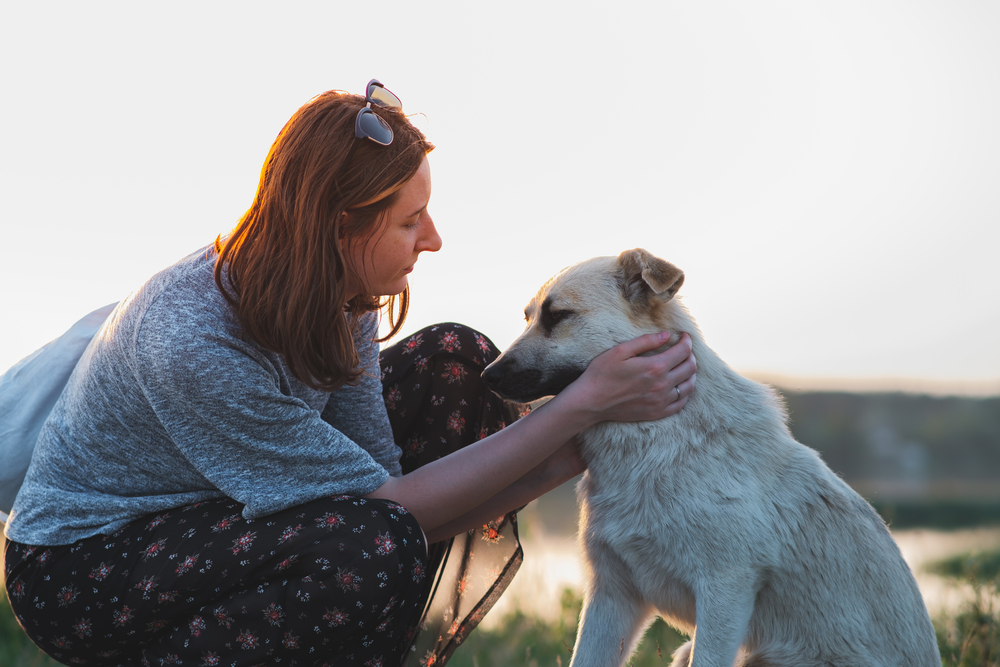 Woman and dog in the nature at sunset. Human and pet relationship, communication and interaction