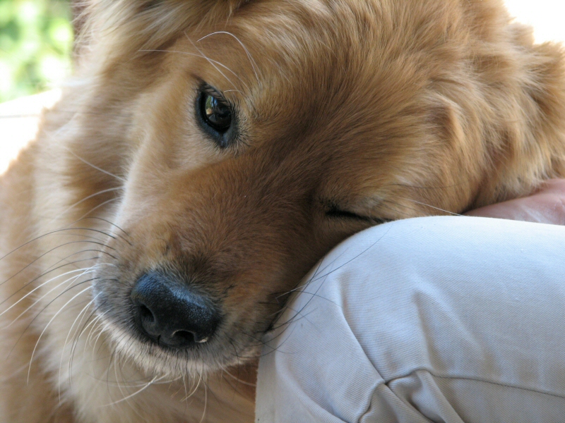 Treating Your Dogs Allergies Correctly