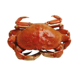 Crab on a white background